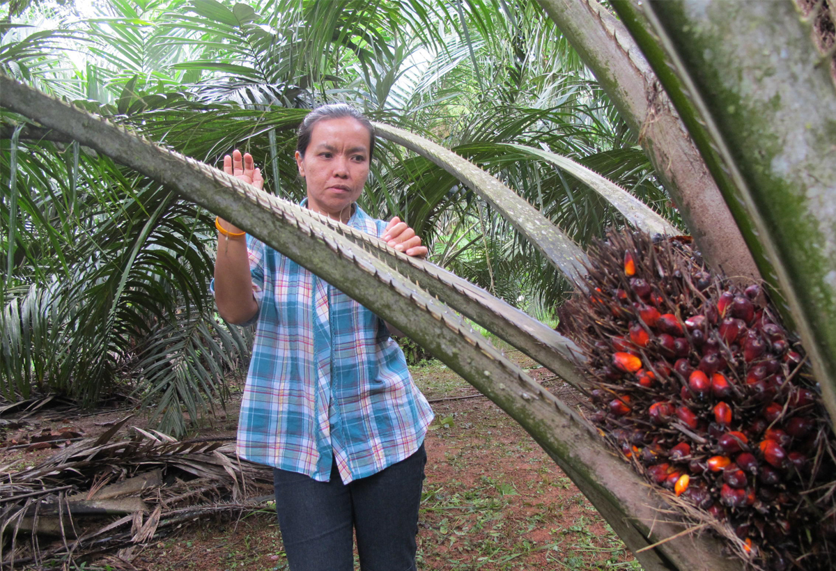 Chirawan Phongat and her neighbours are the first independent small farmers worldwide to receive the seal of approval for sustainable palm oil.